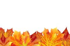 De herfst verlaat kader over wit voor uw tekst Royalty-vrije Stock Afbeelding