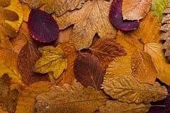 De herfst verlaat kleurrijke achtergrond Autumn Concept Wallpaper Royalty-vrije Stock Afbeeldingen