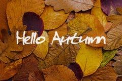 De herfst verlaat kleurrijke achtergrond Hello Autumn Concept Wallpaper Royalty-vrije Stock Afbeeldingen