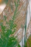 De herfst verlaat waterpijlwortel Stock Foto's
