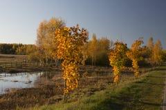 De herfst is verschillend Stock Afbeelding