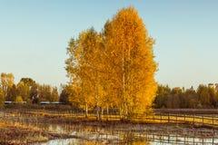 De herfst is verschillend Royalty-vrije Stock Foto