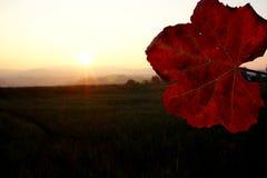 De herfst vibes Stock Foto