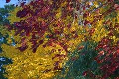 De herfst in volledige bloei royalty-vrije stock fotografie