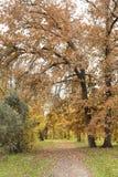 De herfst in volledige pracht stock fotografie