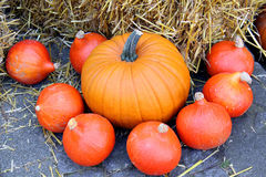 de herfst vruchten Royalty-vrije Stock Afbeeldingen