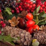 de herfst vruchten en noten Stock Afbeeldingen