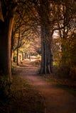 De herfst in Walsall royalty-vrije stock foto's