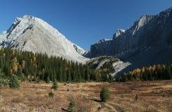 De herfst, wandelaar in weide Stock Fotografie
