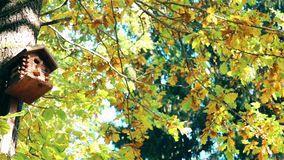 In de herfst weegt een met de hand gemaakt blokhuis voor vogels stock video