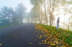 De herfst, weg, mist, gebladerte stock afbeeldingen