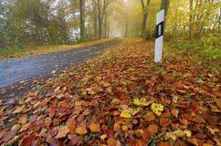 De herfst, weg, mist, gebladerte Royalty-vrije Stock Afbeeldingen
