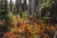 De herfst in de weiden van het bos stock foto