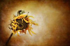 De herfst wenkt Royalty-vrije Stock Fotografie