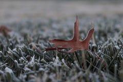 De herfst in de winter stock afbeeldingen