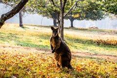 De herfst in de winter stock afbeelding