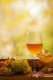 De herfst witte wijn Stock Foto