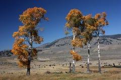 De herfst in Yellowstone NP Royalty-vrije Stock Foto's