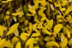 De herfst yelow doorbladert Stock Foto