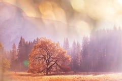 De herfst in Yosemite Royalty-vrije Stock Foto