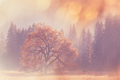 De herfst in Yosemite Royalty-vrije Stock Fotografie