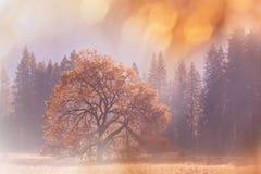 De herfst in Yosemite Stock Foto
