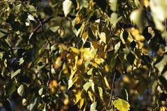 De herfst, zijn bomen met bladen Stock Afbeelding
