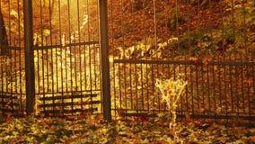 De herfst zonnig park stock footage