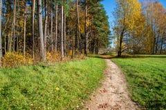 de herfst in zonnige dag in park met verschillende boomboomstammen en toeristenslepen stock foto