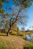 de herfst in zonnige dag in park met verschillende boomboomstammen en toeristenslepen stock fotografie