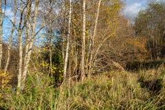 de herfst in zonnige dag in park met verschillende boomboomstammen en toeristenslepen royalty-vrije stock afbeeldingen