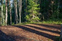 de herfst in zonnige dag in park met verschillende boomboomstammen en toeristenslepen royalty-vrije stock foto