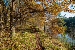 de herfst in zonnige dag in park met verschillende boomboomstammen en toeristenslepen stock foto's