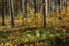 de herfst in zonnige dag in park met verschillende boomboomstammen en toeristenslepen royalty-vrije stock foto's