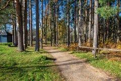 de herfst in zonnige dag in park met verschillende boomboomstammen en toeristenslepen stock afbeelding