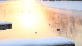 De herfst zonsopgang op de rivier stock video