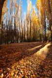 De herfst in Zuideneiland Nieuw Zeeland Royalty-vrije Stock Foto's