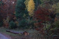 De herfst in zwart bos Stock Foto