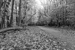 De herfst in zwart-wit stock afbeeldingen