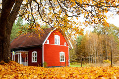 De herfst in Zweden Stock Afbeeldingen