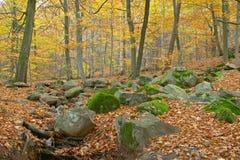 De herfst in Zweden stock fotografie
