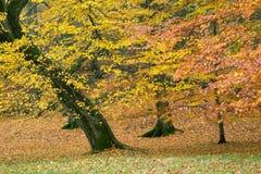 De herfst in Zweden Stock Foto's