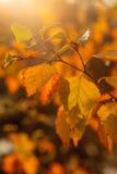 De herfst in Zweden Royalty-vrije Stock Afbeeldingen