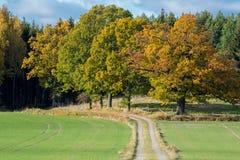 De herfst in Zweden Stock Foto