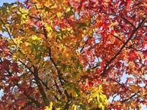 De herfstaard, kleurrijke boomtakken Royalty-vrije Stock Foto's