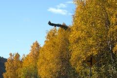 De herfstaard van Alaska gekleurde bergen en blauwe hemel met wolken Royalty-vrije Stock Foto's