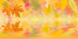 De herfstachtergrond 005 Stock Foto