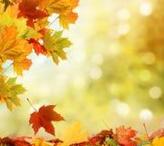 De herfstachtergrond Stock Fotografie