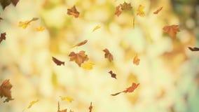 De herfstachtergrond stock video