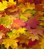 De herfstachtergrond, bladdaling, val van het blad Stock Afbeeldingen